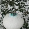 zimowy wazon